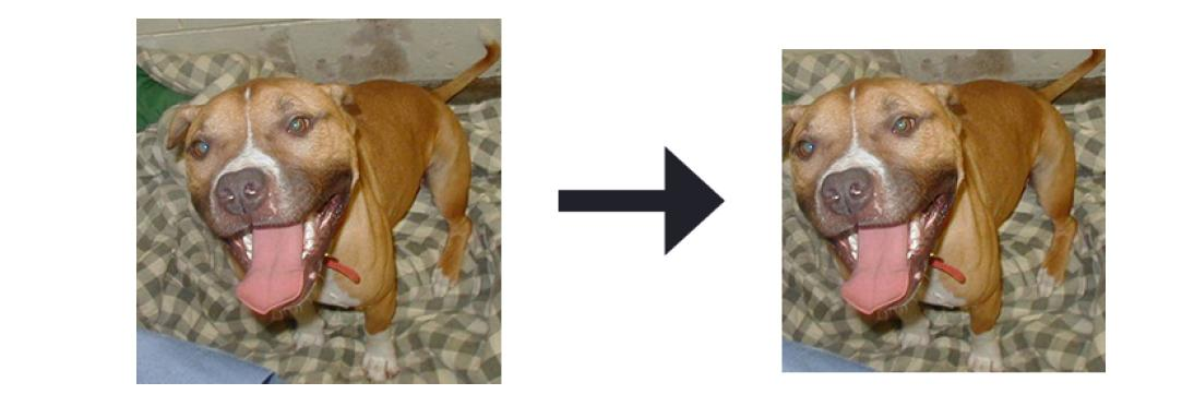 Deep Learning and Computer Vision (PB-10) - Kaggle's Cat and Dog